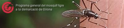 Mesures de prevenció vs. Mosquit Tigre