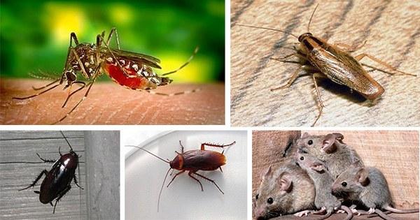 Hem rebut subvenció per a lluitar contra les plagues 2020