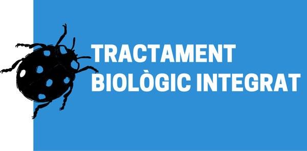 Tractament biològic i natural contra el pugó dels arbres de Vilafant