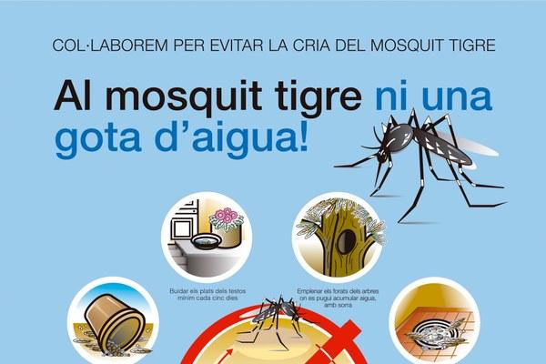 Augment de la cria de mosquit tigre després dels recents dies de pluja